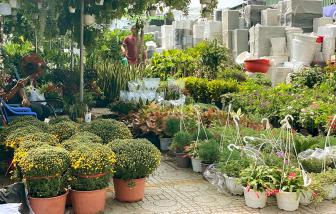 Mặt bằng bán hoa tết 2-3 triệu đồng, nhà vườn vẫn e dè