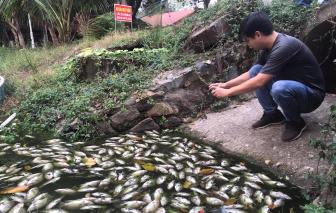 Xác định nguồn gốc cá chết trắng trên kênh Bưng Cải
