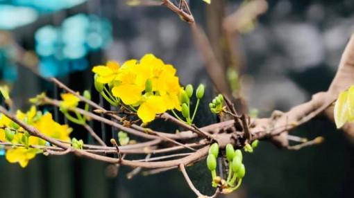 Tết thảnh thơi: Về quê quét lá trong vườn