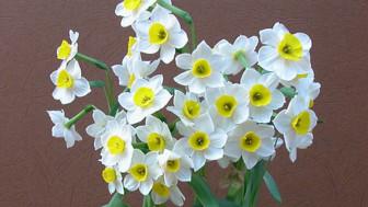 Những loại hoa phú quý ngày Tết