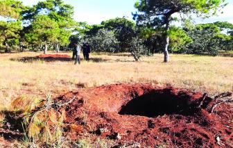 Nghịch lý đáng báo động: mê cây nhưng lại… phá rừng