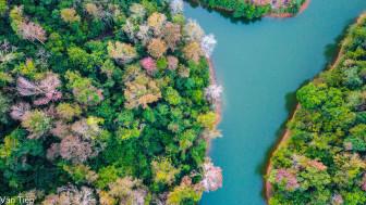 Sắc xuân thơ mộng ở hồ Nà Tấu, Cao Bằng