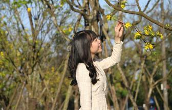 Ngắm vườn hoàng mai tuyệt đẹp khoe sắc trước Kinh thành Huế