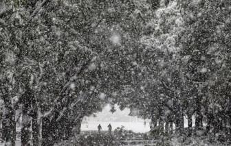 Chùm ảnh tuyết rơi trắng xoá nhiều nơi trên thế giới