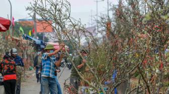 Người Hà Nội đổ xô đi mua hoa lê tiền triệu về chơi sau tết