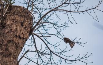 Từ chuyện giải cứu một chú chim nhỏ mắc kẹt trên cành...