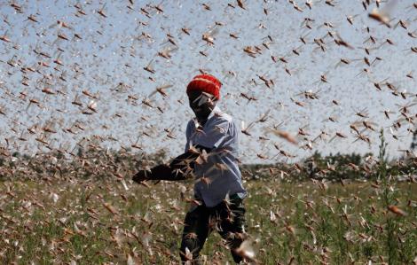 Những hình ảnh khó tin về đại dịch châu chấu ở Kenya