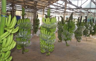 Xuất khẩu rau quả tăng trở lại sau hơn 3 tháng