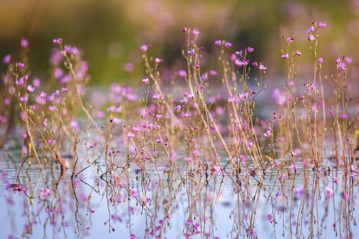 """Loạt hoa đẹp khoe sắc vào tháng 3, cho chị em tha hồ """"sống ảo"""""""