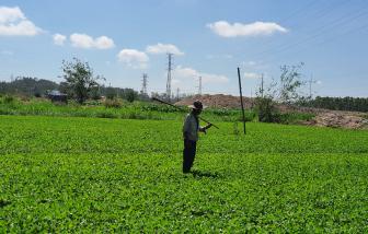 Quảng Ngãi: Chuẩn bị cưỡng chế thu hồi đất hoa màu cho doanh nghiệp làm dự án bất động sản
