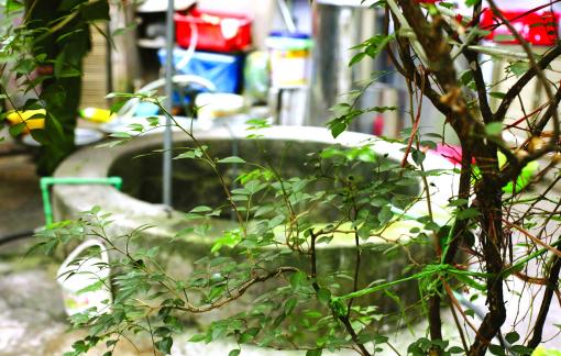 Những giếng cổ giữa lòng phố cũ