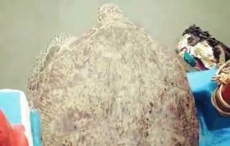 Người dân tự nguyện nộp rùa quý hiếm nặng hơn 120kg