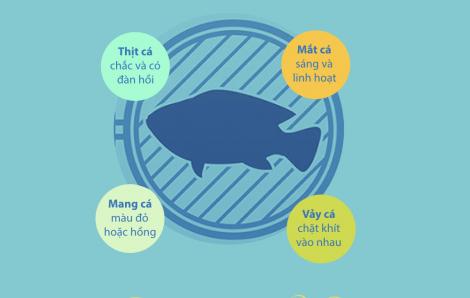 [Infographic] Những bộ phận của cá không nên ăn