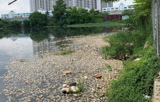 Cá chết bất thường nổi trắng hồ nước cạnh chung cư Ehome 3