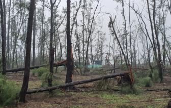 Công ty Phát Đạt trình dự án nguy cơ phá nát hàng trăm hecta rừng ở Quảng Ngãi