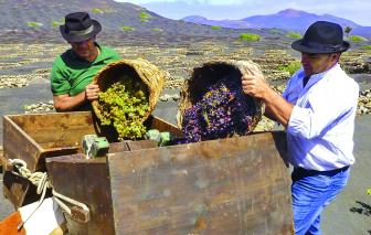 Làng rượu nho trên miệng núi lửa