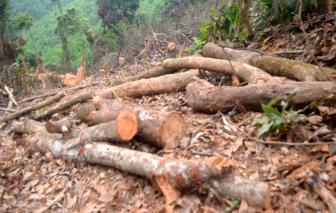 Chặt phá rừng tự nhiên được giao bảo vệ, người đàn ông ở Nghệ An bị xử phạt 37,5 triệu đồng