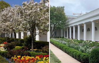 """""""Cuộc chiến"""" Vườn Hồng của hai bà chủ Nhà Trắng"""