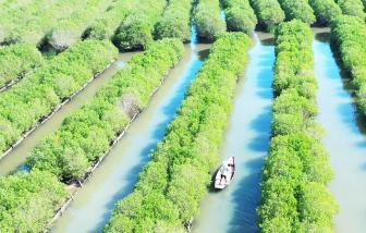 Quảng Ngãi: Người dân tự ý đào hơn ngàn mét vuông  ao, hồ lấn chiếm rừng phòng hộ ven biển