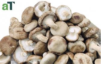 Ăn nấm mỗi ngày có thể phòng ngừa nguy cơ ung thư
