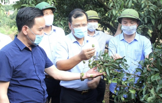 Bắc Giang lên kế hoạch đón 190 thương nhân Trung Quốc tới thu mua vải thiều