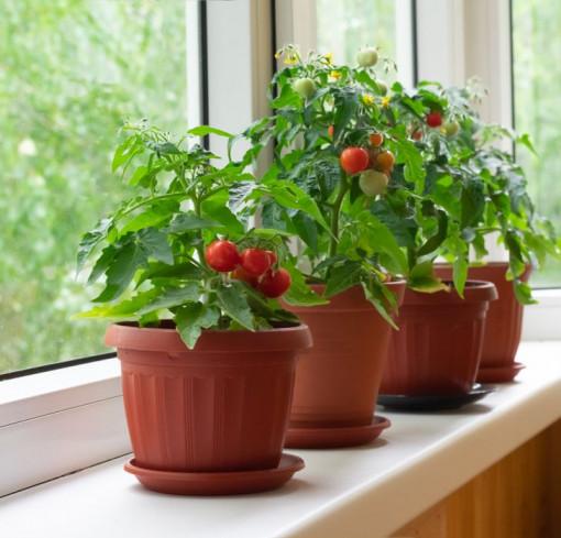 Cách tạo khu vườn bên cửa sổ