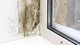 Những dấu hiệu cảnh báo ngôi nhà bạn đang bị ô nhiễm nội thất