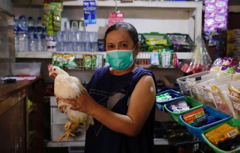 Indonesia tặng gà để khuyến khích người dân tiêm vắc xin COVID-19