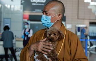 Trung Quốc: Nhà sư ở Thượng Hải cưu mang 8.000 chú chó hoang