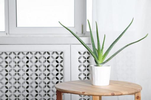 10 loại cây giúp làm sạch không khí cho ngôi nhà bạn