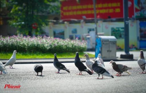 Đường vắng, chim bồ câu vô tư bay nhảy