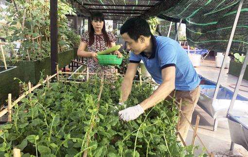 Sống vui, sống khỏe trong mùa dịch nhờ vườn rau trên cao