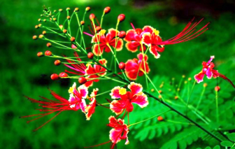 Loài hoa tương thân tương ái
