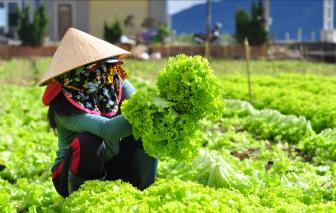 Đà Lạt khuyến khích trồng rau ngắn ngày hỗ trợ các tỉnh thành chống dịch COVID-19