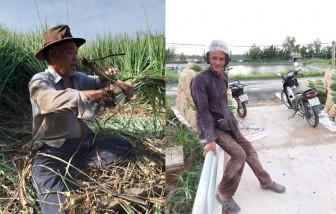 Những lão nông miền Tây cắt cả ruộng sả gửi Sài Gòn