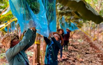 Bộ Nông nghiệp tính phương án nhờ quân đội thu hoạch nông sản tại miền Tây