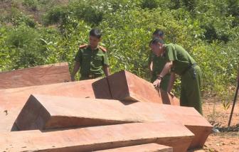Để mất rừng gây hậu quả nghiêm trọng, giám đốc và hàng loạt cán bộ công ty bị truy tố