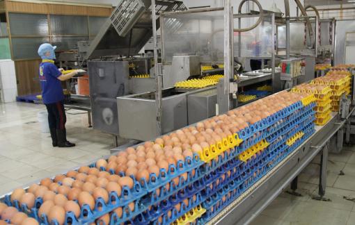 Lương thực, thực phẩm miền Nam đang dư thừa quá nhiều