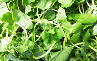 Món ăn từ loài rau hoang dại