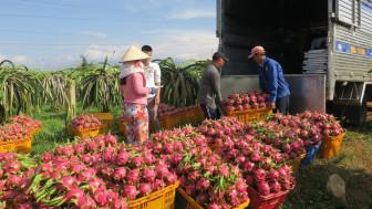 Chính phủ yêu cầu tháo gỡ khó khăn đầu ra cho nông sản