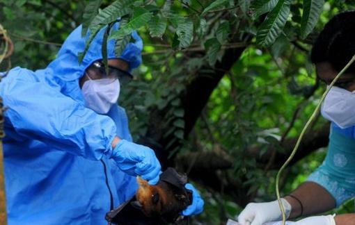 Chuyên gia y tế cảnh báo Nipah là loại virus đáng lo ngại