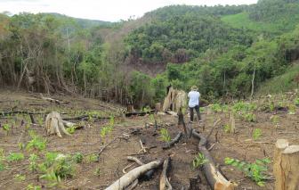 Phú Yên khởi tố vụ án hình sự hủy hoại rừng làm rẫy