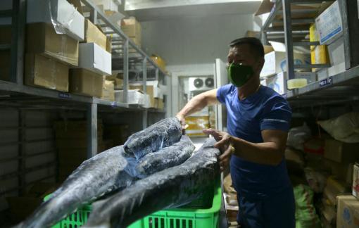 Hải sản chất đầy kho lạnh, dân buôn mòn mỏi chờ ngày được bán
