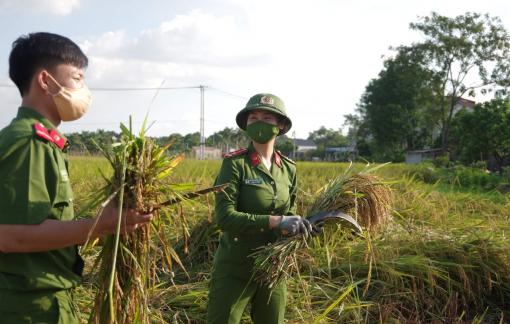 Hà Nội: Công an xuống ruộng gặt lúa giúp người dân vùng cách ly