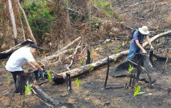 Bắt tạm giam 2 bị can vụ phá rừng phòng hộ ở Phú Yên
