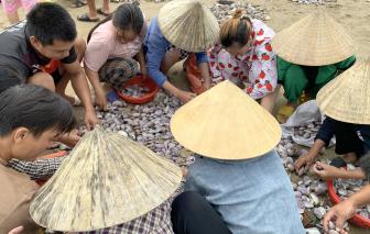 """Người dân vùng biển Nghệ An đổ xô đi vớt """"lộc trời"""" sau lũ"""