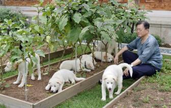 Tổng thống Hàn Quốc đề nghị cấm ăn thịt chó