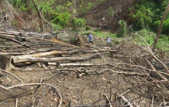 Bắt 2 đối tượng phá rừng tự nhiên ở Phú Yên