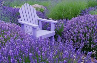Những loại hoa vừa làm đẹp sân vườn vừa xua đuổi muỗi