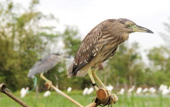 Trả lại bình yên cho chim trời mùa di cư